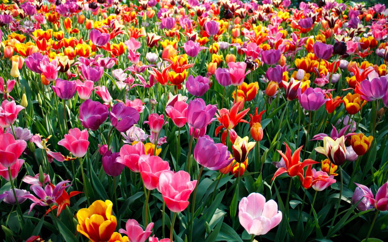 La primavera for Plantas de balcon para todo el ano